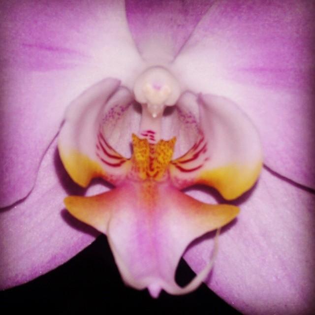 Orchid detail #organicshapes #godart #universalforms #aroundthehouse #primalattraction #orchidporn
